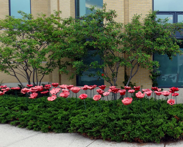 poppies at the guild